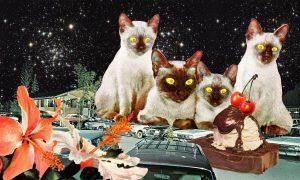 Eugenia Loli - 4 Katzen