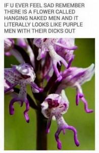 Hanging Naked Man Flower